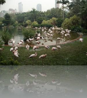 Розовые фламинго в ареале небоскрёбов (зоопарк)