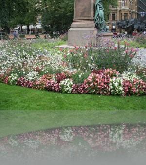 Во многих странах такие цветы в клумбах не используют, а зря