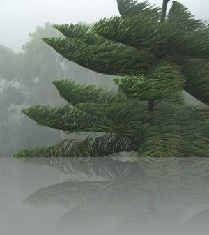 Был ужасный ветер, а дерево-просто экзотика