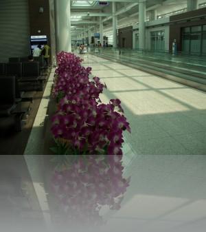 Ну как же в Азии без орхидей!